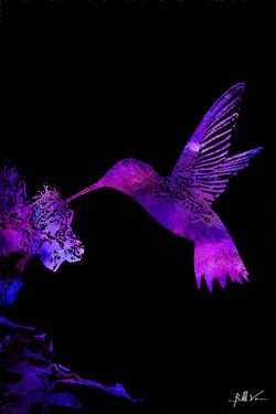 Breck Hummingbird 4 x 6.jpg