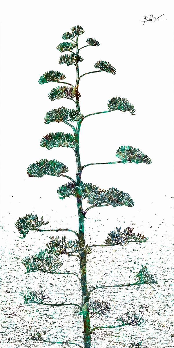 Malta Pine