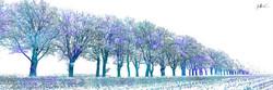 Trees in the Field 4 x 12.jpg