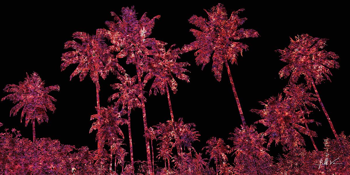 Rusty Palms