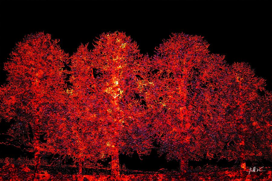 4 Trees 4 x 6.jpg