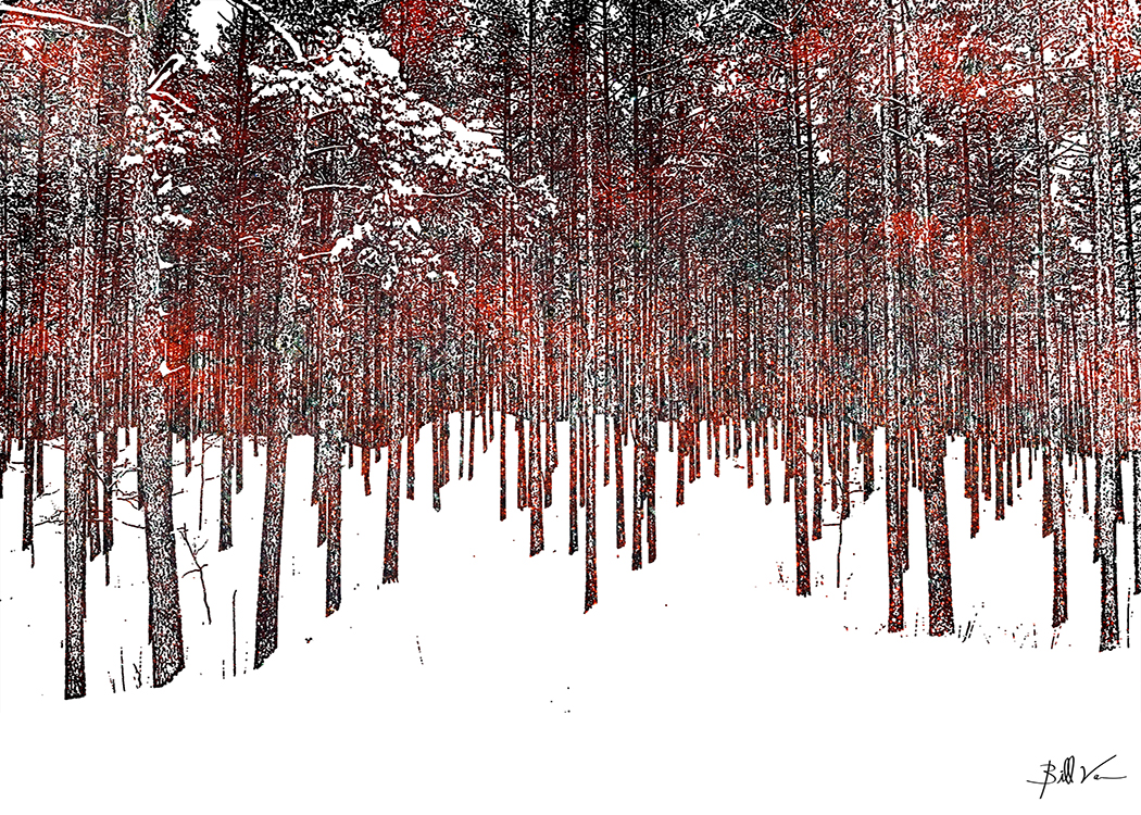 Winter Path II 5 x 7.jpg