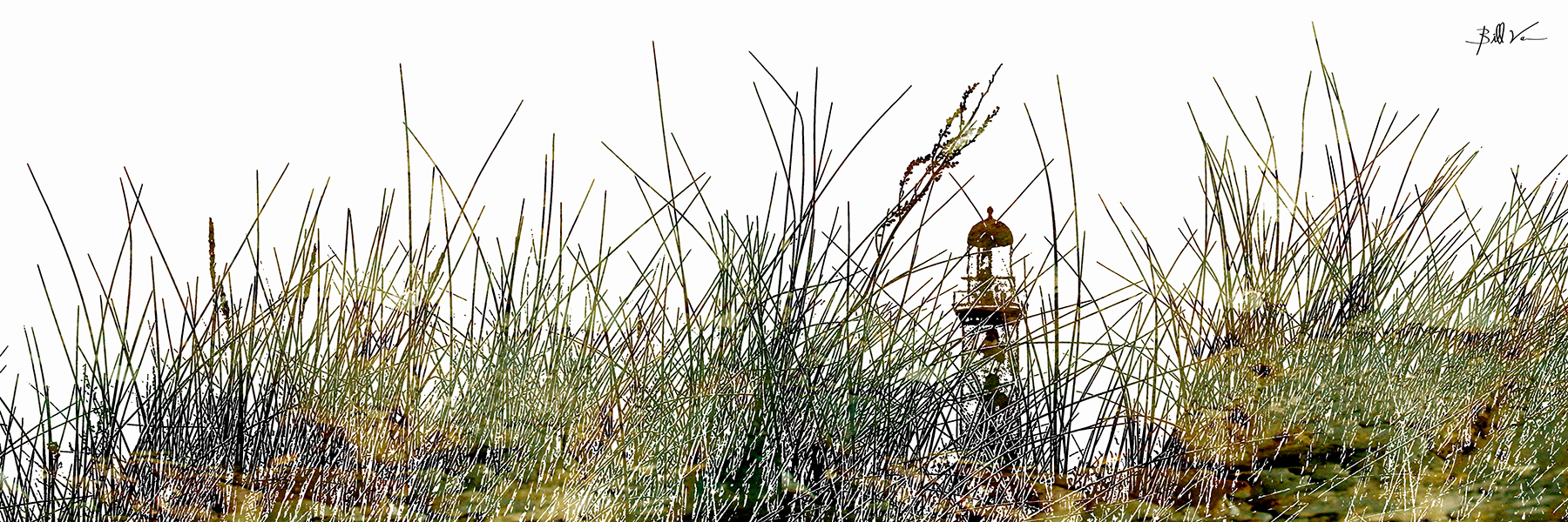 Lighthouse Grass