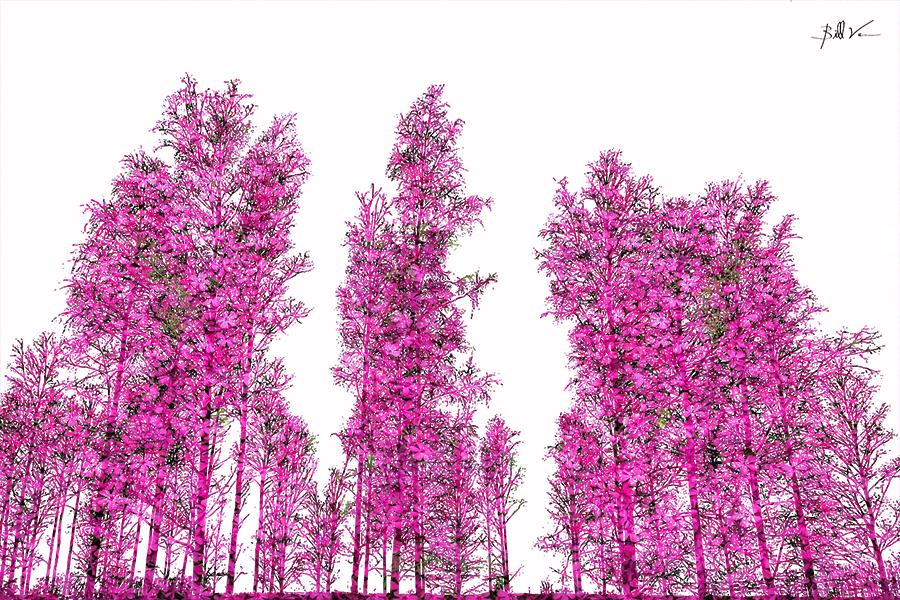 Forest Grove 4 x 6.jpg