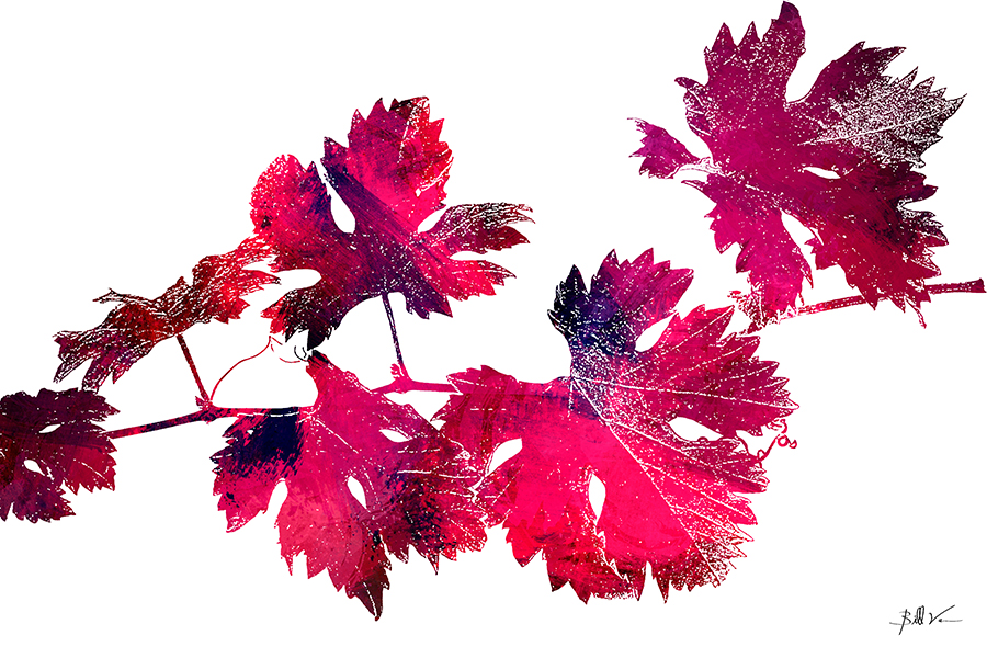 Grape Leaves 4 x 6.jpg