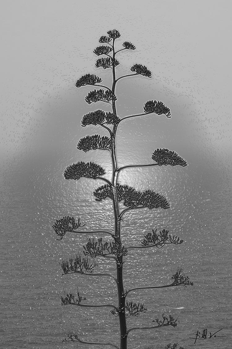 Metal Malta Pine