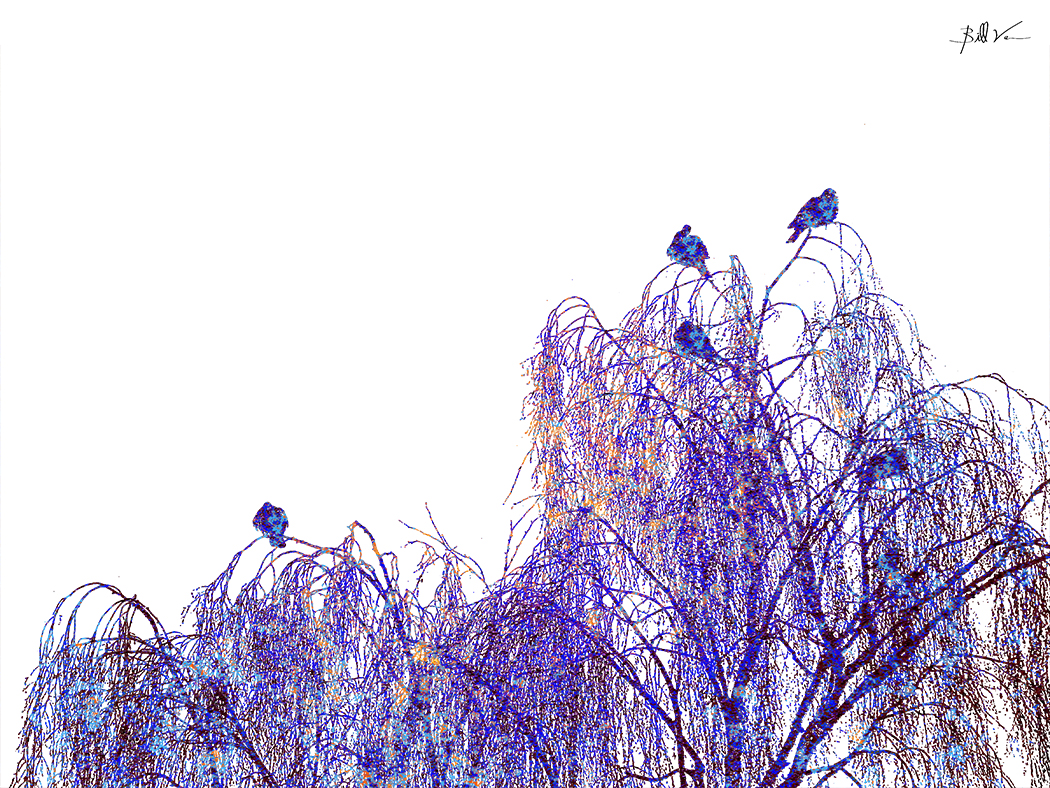 Birds on the Willow