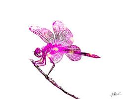 Dragonfly Twig 16 x 20