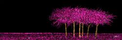 Six Trees 16 x 48