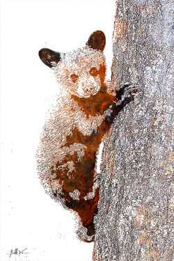 Cub on the Tree 4 x 6.jpg