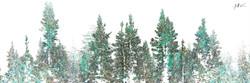 The Pines Green 4 x 12.jpg