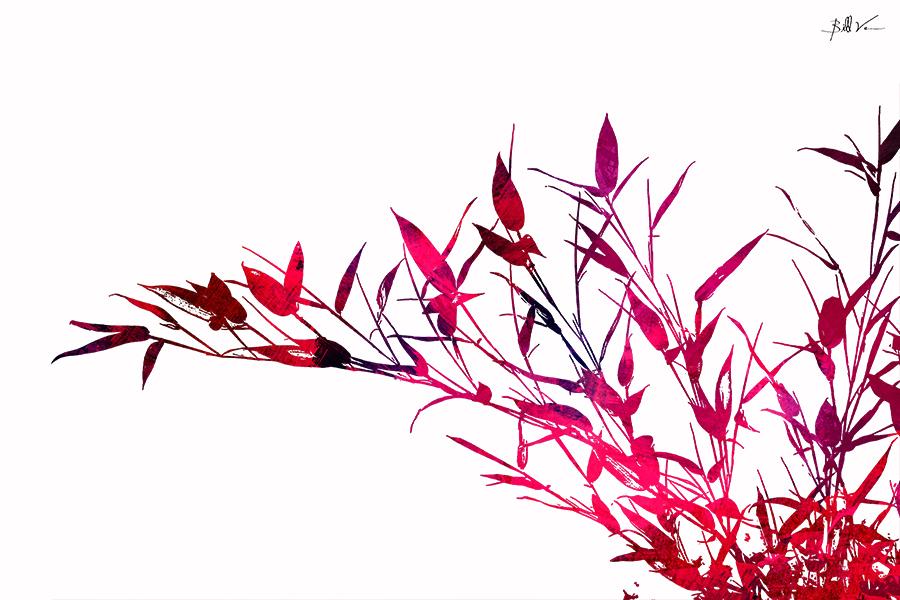 Reeds & Leaves