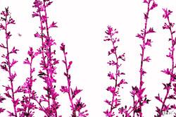 Spring Weeds 4 x 6.jpg