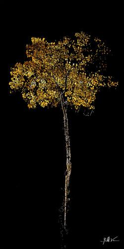 Lone Tree 4 x 8.jpg
