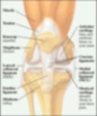 Knee Common Injuries Anatomy