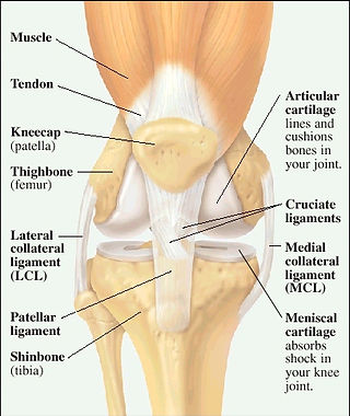 Knee Common Injuries Anatomy