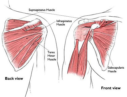 Rotator Cuff Injuries - OccFit Physiotherapy