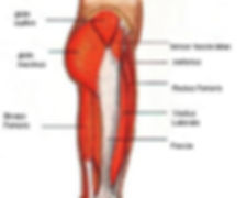 Hip Injuries - Common Injuries OccFit Physiotherapy Emu Heights