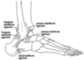 Foot and Ankle Ligament - Common Injuries OccFit Physiotherapy Emu Heights