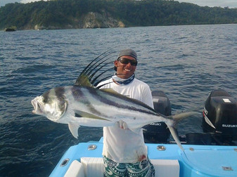 Rooster Fish
