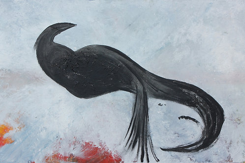 La colombe noir