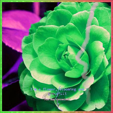 Just sta green.jpg