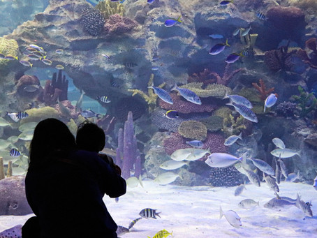 Investment Readiness Grant Awarded to The Aquatic Biosphere Project