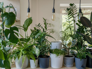 Let's talk; house plants