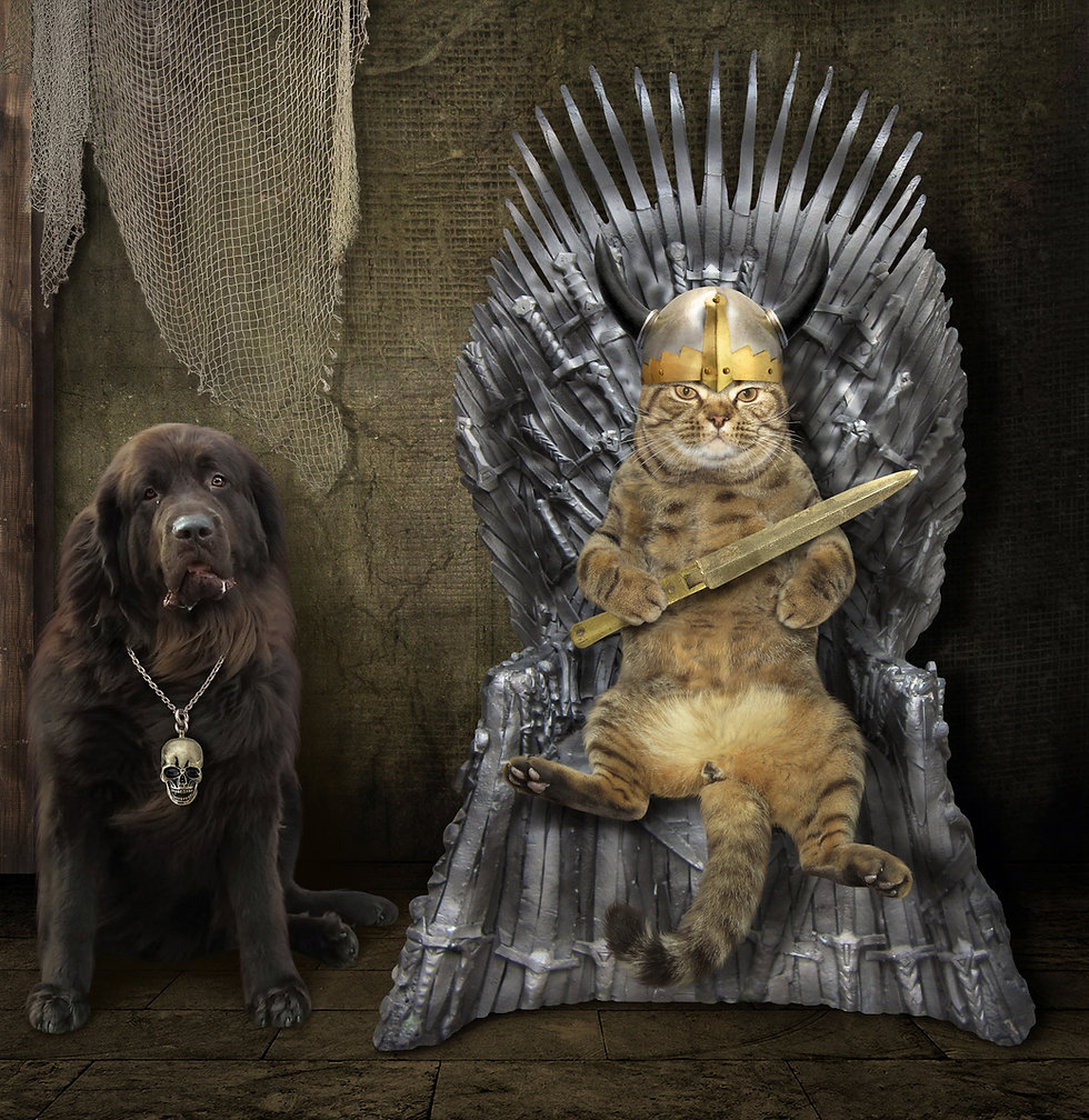The cat king is sitting on an iron thron