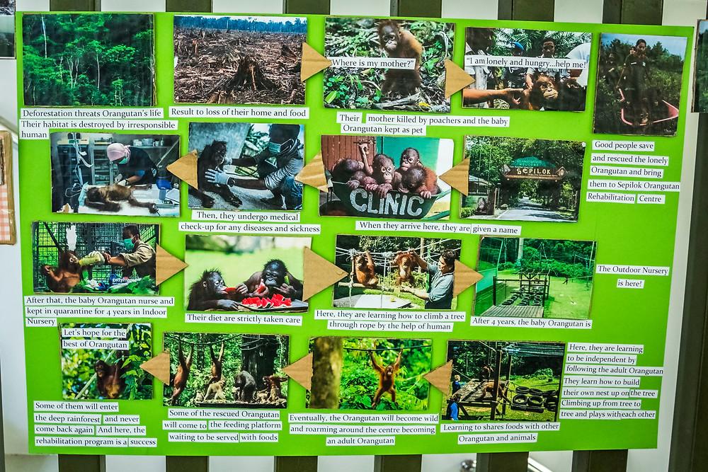 Orangutan/Palm Oil Cycle, SORC