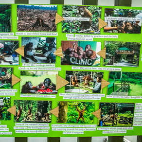 Our Experience With The Palm Oil Plantations Of Borneo!