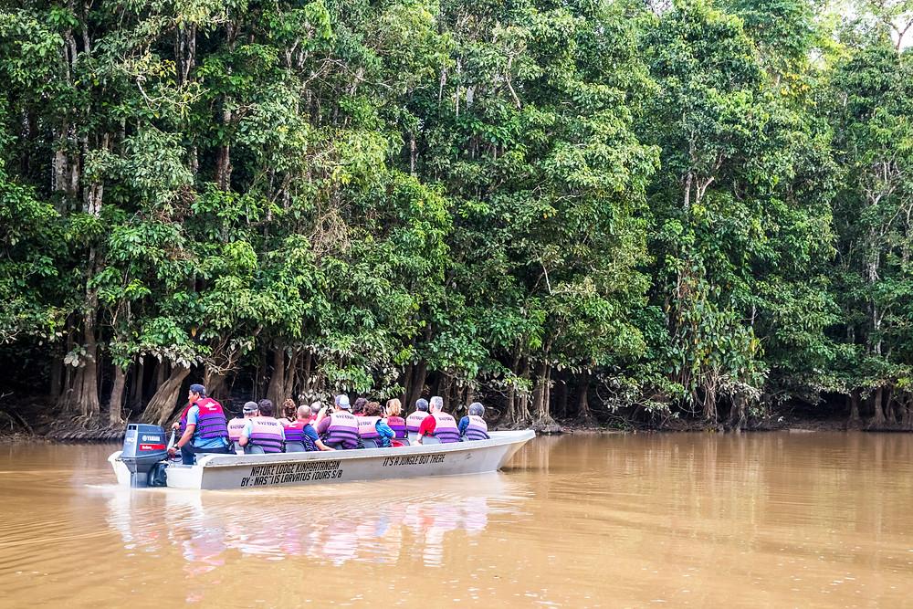 Kinabatangan River Cruise, Malaysian Borneo
