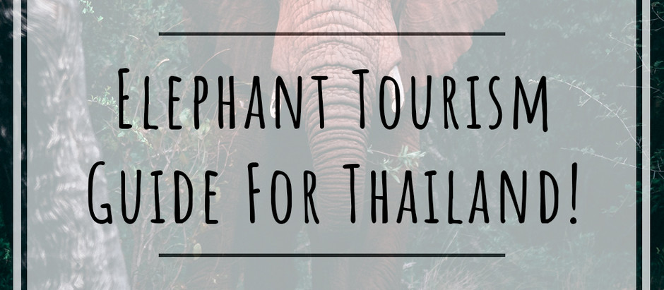 What Is Elephant Tourism & Why's It An Issue? Elephant Sanctuary Guide For Chiang Mai, Thailand!