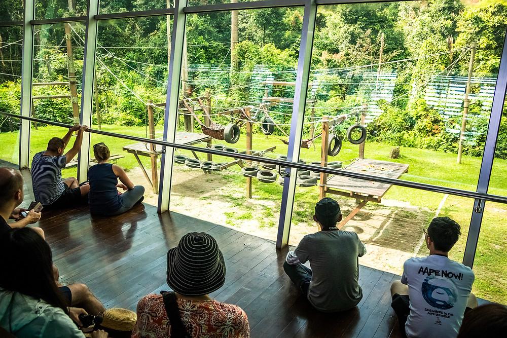 Sepilok Orangutan Rehabilitation Center Nursery, Sabah, Malaysian Borneo