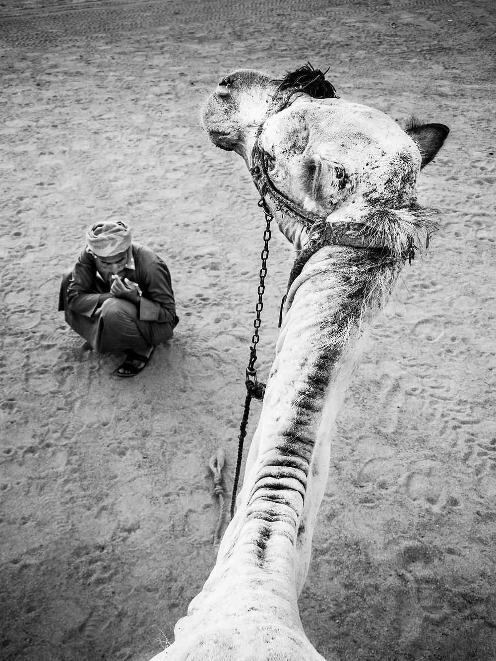 Camel Riding, Sinai Desert, Egypt