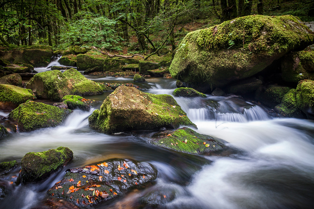 Golitha Falls, Bodmin Moor, Cornwall best woodland walks in cornwall