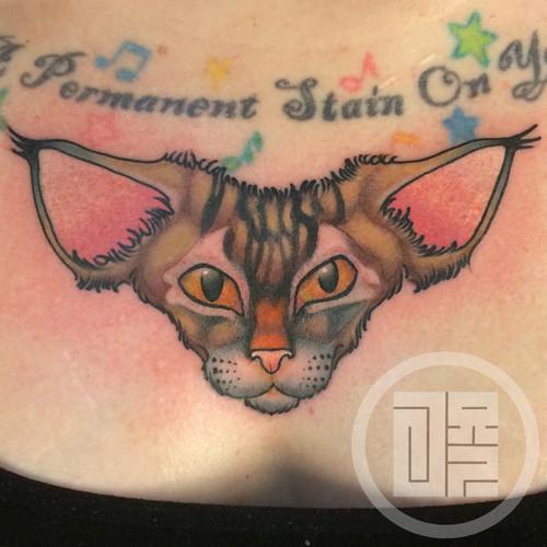 meagan_cat_head.jpg