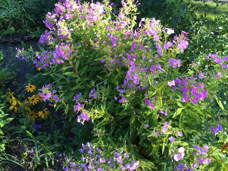Summer's Bloom