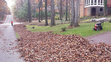 Leaf Removal, Roanoke Virginia
