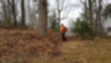 Leaf Removal Roanoke,  Virginia
