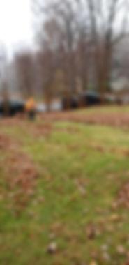 Leaf Removal, Roanoke Virginia
