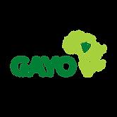 GAYO Logo - Colour@300x.png