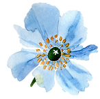 blue poppy.png