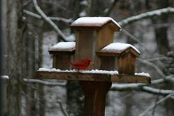 Winter Wonderland At Dreasmcapes