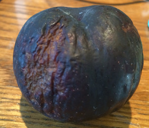 The tale of the roughed up plum