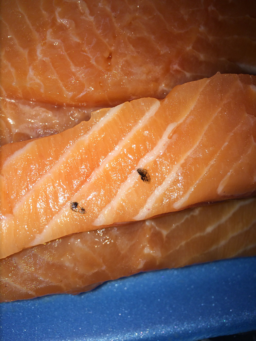 Firm black bits on a salmon fillet could be wayward scales and are nothing to worry about it