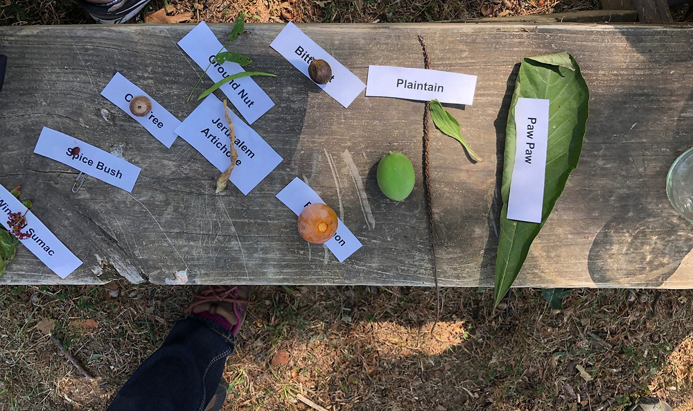 Various wild, Mid-Atlantic plants that can be harvested for food.