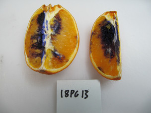 Why did this orange turn purple?!?