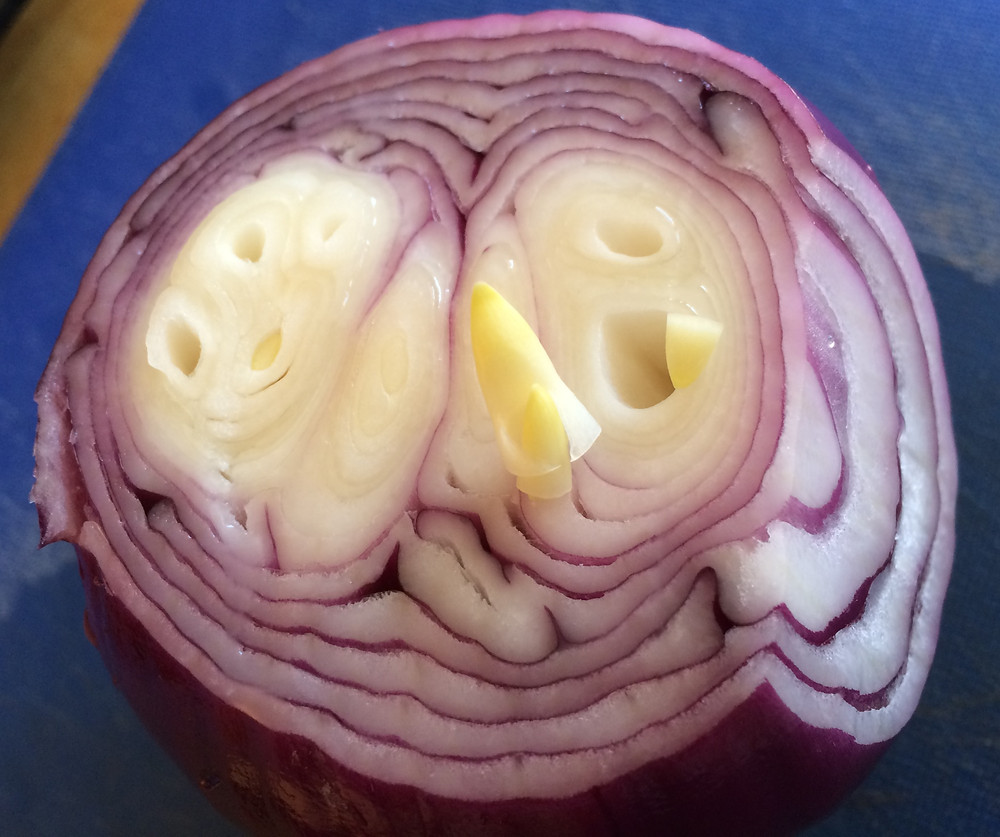 Loose sprouts fall out of a red onion