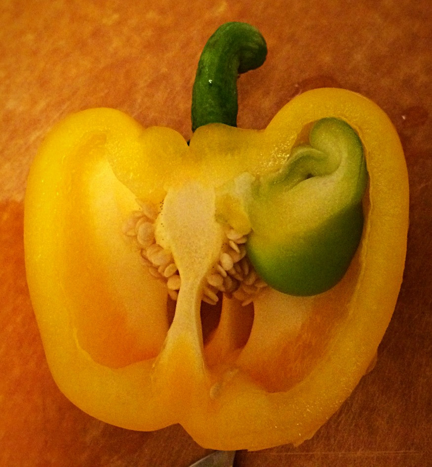 "This yellow pepper has an ""internal proliferation,"" a growth inside the pepper that looks like another pepper"